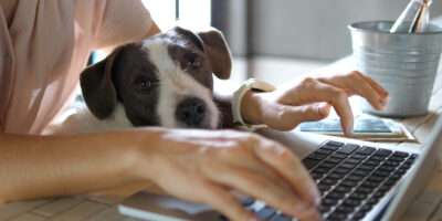 Female working on a laptop with a dog sitting on her knee